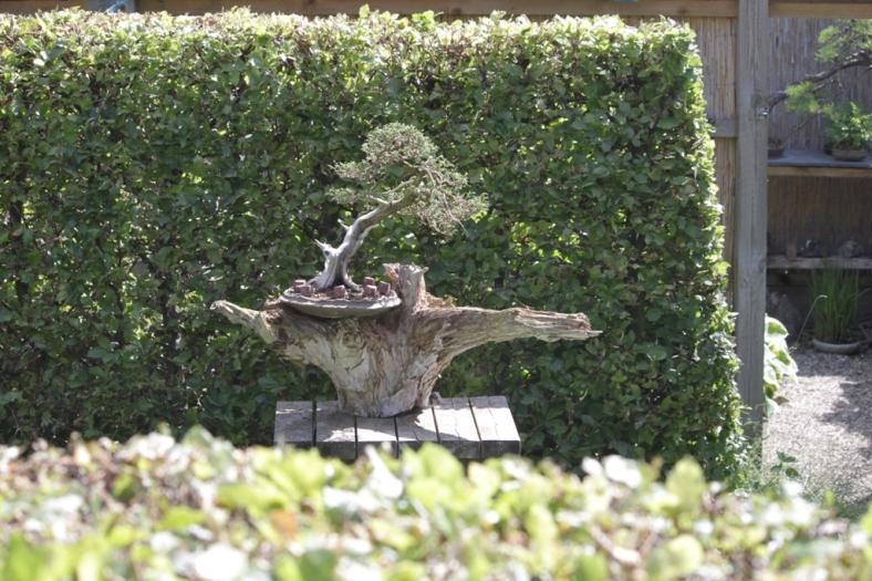 Anderledes opstilling af bonsai. Foto: Martin Nielsen